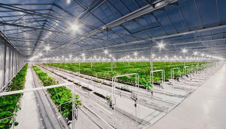приобретение тепличного комплекса под ключ для продажи томата